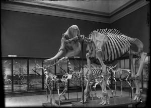 Paleo Animals