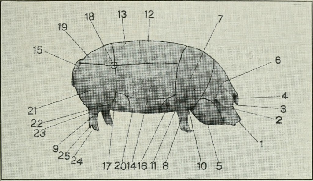 1918 Diagram of Southern Pork Production